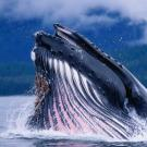 Увидеть огромного кита